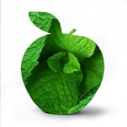 Apple Mint Flavour...
