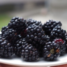 Blackberry Flavouring