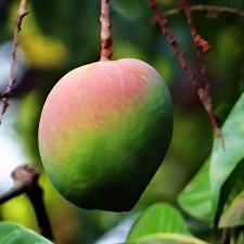 Alphonso Indian Mango Flavouring