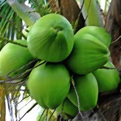 Coconut Flavour...