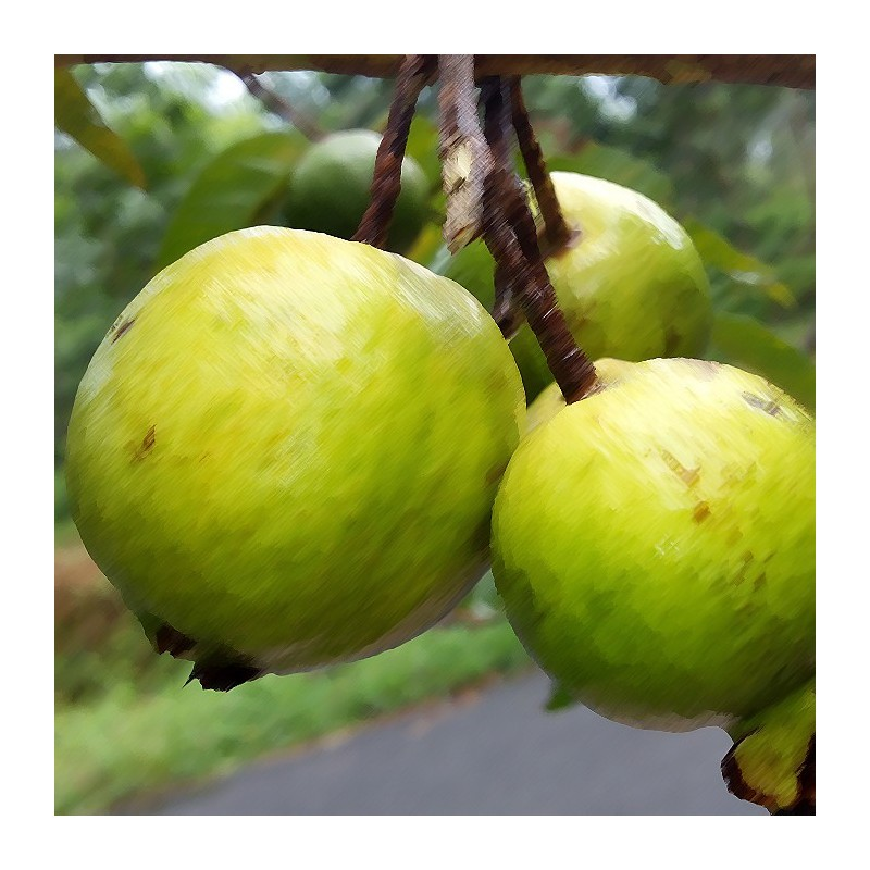 Guava Flavour Concentrated Food Flavouring