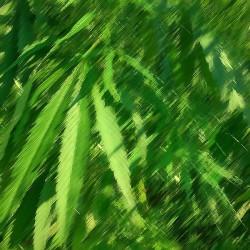 Hemp/Weed Flavour...