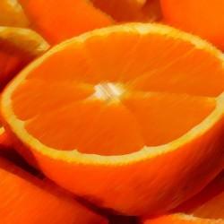 Florida Orange Flavour...